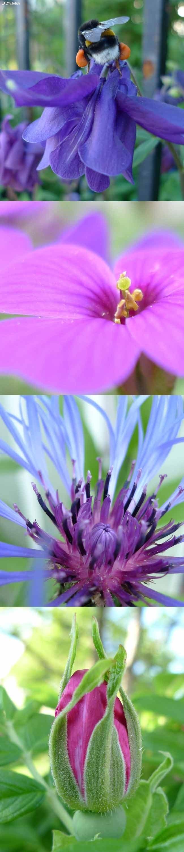 Fargerike-blomster-til-hvitt-hus