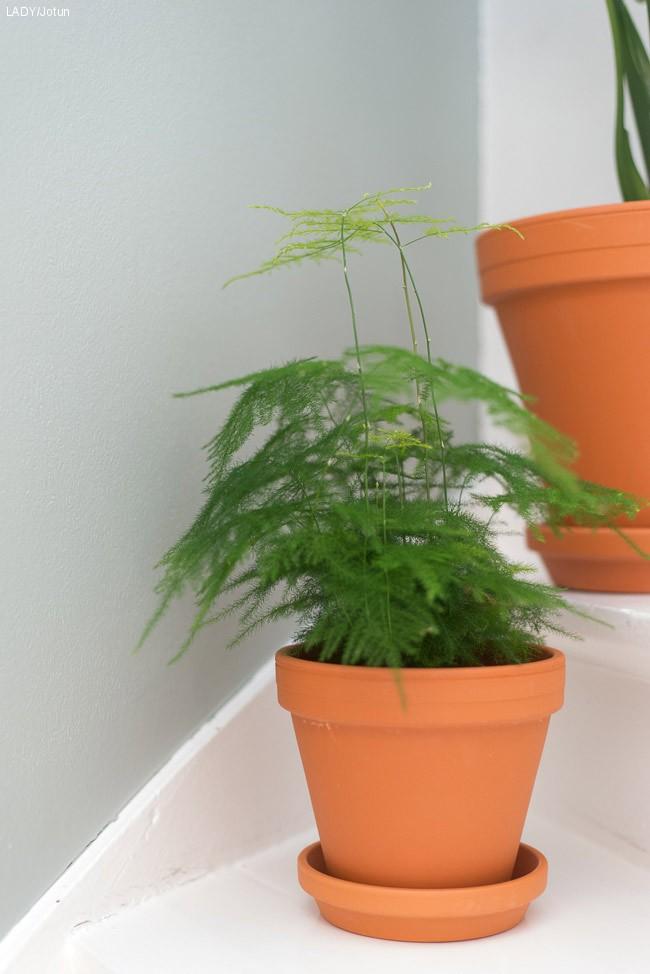 Plantetrend
